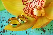 Wedding rings and orchid flower, close-up, on color wooden background