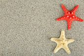 Starfish on sand background