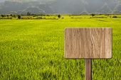 Blank wooden sign on field of paddy rice farm. Concept of rural, idyllic, tranquility etc.