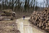 picture of ax  - Young lumberjack carrying an ax and walking beside cut trunks in forest