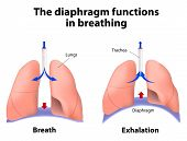 stock photo of exhale  - diaphragm functions in breathing - JPG