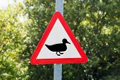 stock photo of duck  - A road sign warning triangle of Ducks - JPG