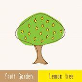 pic of single  - Garden fruit trees  - JPG