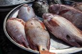 picture of red snapper  - Fish Red Snapper Market Stall fresh dead - JPG