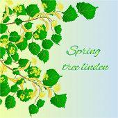 foto of linden-tree  - Spring tree linden Spring green background vector illustration - JPG
