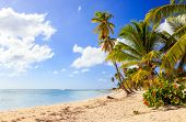 picture of caribbean  - Beautiful caribbean beach on Saona island Dominican Republic - JPG