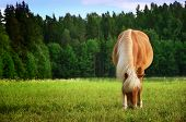 picture of horses eating  - Brown horse eats grass in meadow summertime - JPG