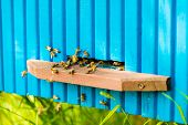 foto of beehive  - Bees are going in and out of their beehive - JPG