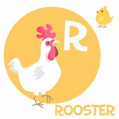 image of roosters  - Funny cartoon animals vector alphabet letter for kids from A to Z - JPG