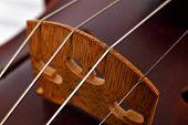 stock photo of violin  - View on violin strings and violin body Close up - JPG