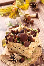 stock photo of crimini mushroom  - Edible mushrooms  - JPG