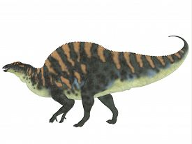 picture of herbivore  - Ouranosaurus was a herbivorous hadrosaur dinosaur that lived during the Cretaceous Period of Africa - JPG