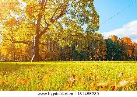 poster of Autumn picturesque landscape in sunny autumn landscape park lit by sunlight -autumn park in sunshine. Sunny autumn landscape of autumn park with golden trees. Autumn park landscape in soft sunny light