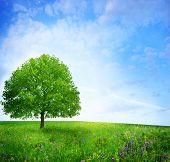 oak tree on the flower field