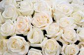 Many White Roses