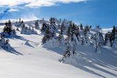 Snowy Hill-side