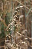 Stalk of Grass