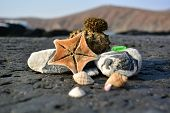 Sea Landscape On A Natural Background. Sea Composition From Seashells, Sea Star, Pebbles And Sea Urc poster