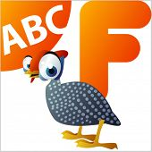 ABC animals: F is for Fowl