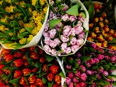 Flower Market Tulips