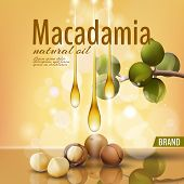 Realistic 3d Macadamia Nut Oil Cosmetic Shell Ad Template. Branch Leaves Nutshell. Light Golden Sunn poster