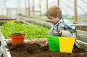 Gardener In Polytunnel. Gardener Polytunnel Greenhouse. Small Boy Gardener Working In Polytunnel Ora poster