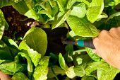 Gardener with trowel
