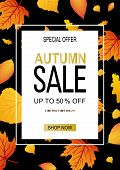 Autumn Sale Vector Banner Template With Frame And Sale Text In Fall Season Leaves Background For Sea poster
