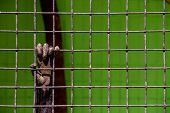 Animal Hand Behind Zoo Bars Is A Conceptual Photo Of Bondage poster