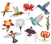 Hummingbird Vector Tropical Humming Bird Character With Beautiful Birdie Wings On Exotic Flowers In  poster