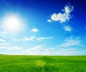 field of green grass and blue sun sky