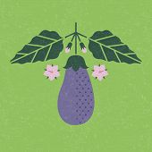 Eggplant Illustration. Eggplant With Leaves And Flowers On Shabby Background. Symmetrical Flat Compo poster