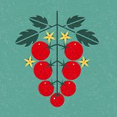 Tomato Cherry Illustration. Ripe Tomatoes With Leaves And Flowers On Shabby Background. Symmetrical  poster