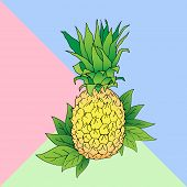 Vector Line Illustration Of Pineapple On Color Block Background. Color Ananas For Label, Menu, Icon. poster