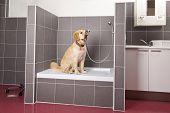 dog sitting in shower