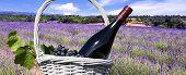 Lavendel in der Landschaft