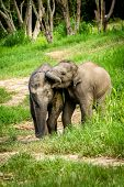 Two baby elephants playing in grassland field.
