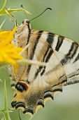 Butterfly In The Field