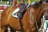 Thoroughbred horse close-up