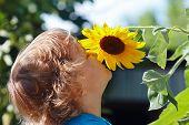 Kleine leuke jongen snuiven een zonnebloem in de open lucht op een zonnige dag