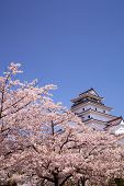 Castle And Cherry Blossom