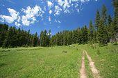Hiking At Yellowstone National Park