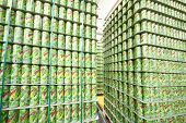 MOSCOW - MAY 16: Many cans of mojitos in Ochakovo factory, on May 16, 2012 in Moscow, Russia. Ochakovo has breweries in several Russian cities - Moscow, Krasnodar, Tyumen, Penza.