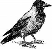 Big Crow.eps