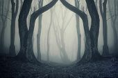 Dark forest scene with fog and twin trees on halloween