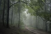 Branch with green leaves over a road in summer in a forest with fog