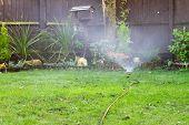 Sprinkler Watering The Lawn In An Urban Garden