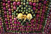 foto of sukkot  - Sukkot festive celebration of the Samaritan community - JPG