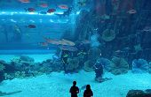 DUBAI, UNITED ARAB EMIRATES - MARCH 21: View of the aquarium in Dubai Mall shopping center in Dubai, on March 21, 2011. The largest indoor aquarium in the world, length of 50 meters.