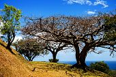 Noon Trees